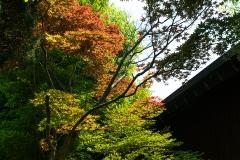 gallery_garden05